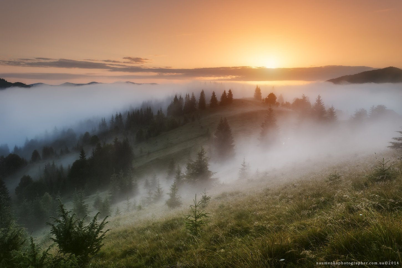 украина, карпаты, дземброня, лето, туман, лес, пейзаж, небо, утро, горы, природа, путешествия, туризм, солнце, сцена, фон, страна, красота, туманный, цвет, земля, свет, горы, естественно, дерево, Александр Науменко