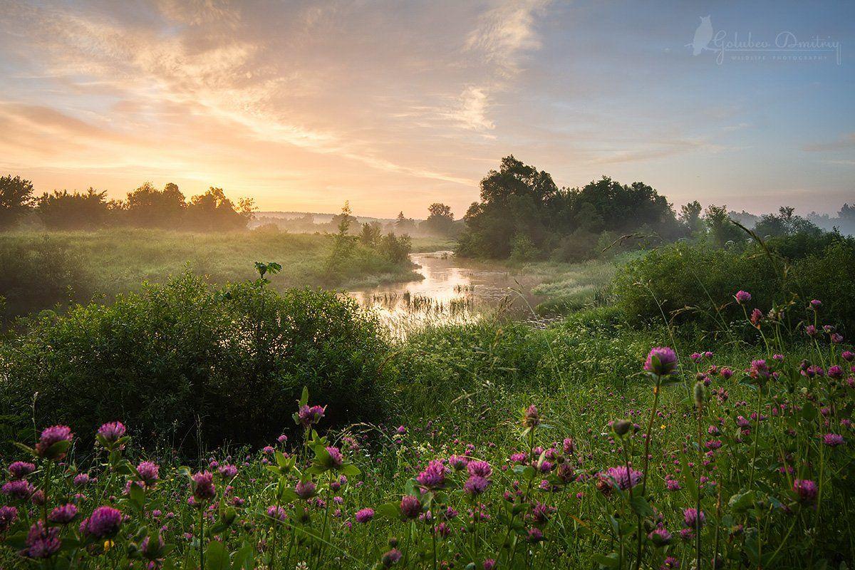 landscape, clover, morning, sky, meadow, trees, river, fog, sunrise, green, summer,пейзаж, утро, восход, река, клевер, туман, небо, Голубев Дмитрий