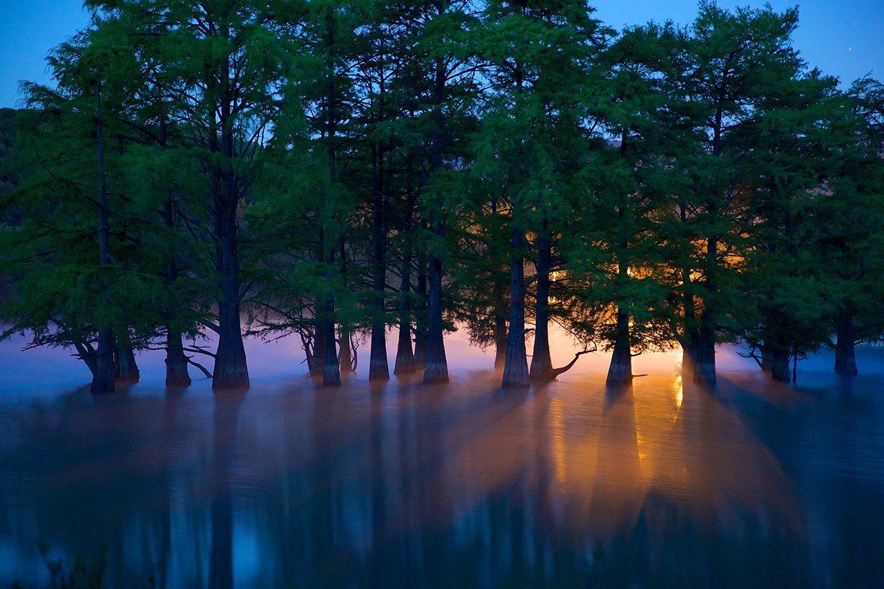утро, болотные кипарисы, роща, сукко, краснодарский край, стволы, водоем, Никифоров Егор