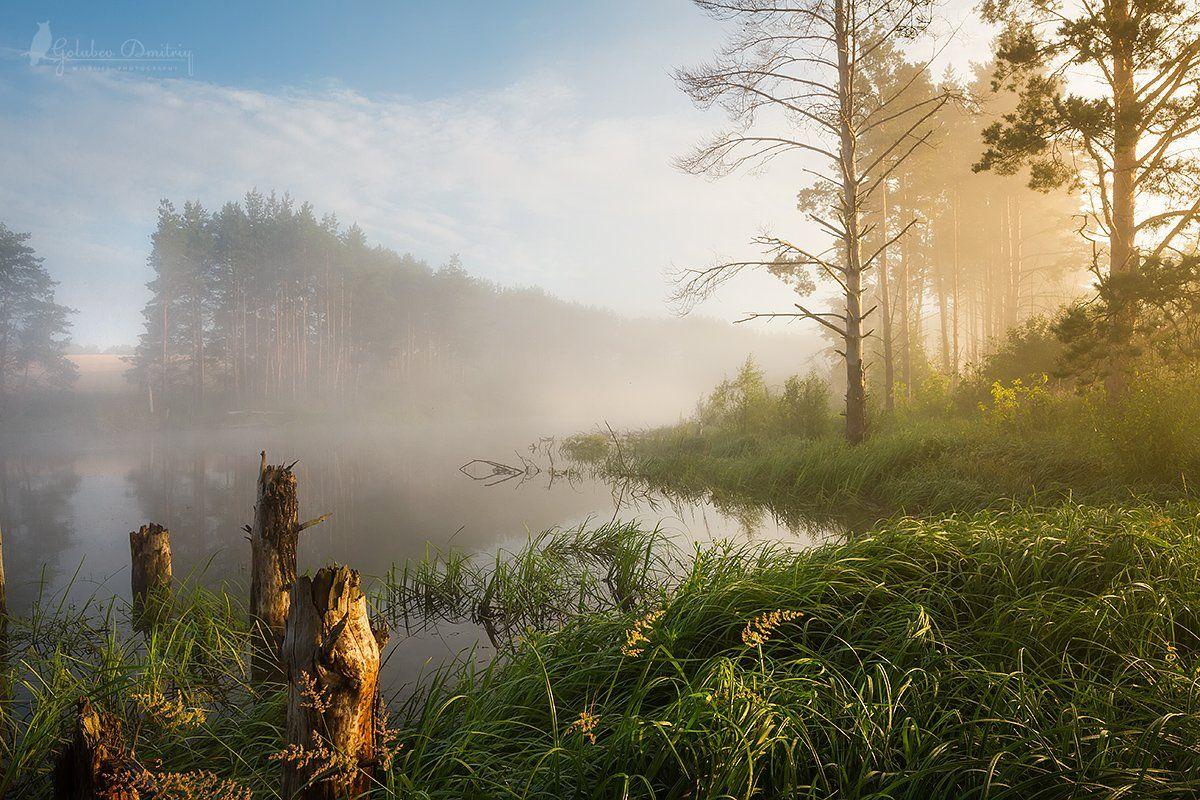 morning, summer, lake, fog, sun, sunset, trees, grass, утро, туман, рассвет, озеро, деревья, Голубев Дмитрий