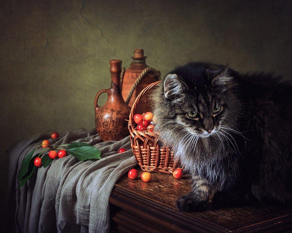 фото, кот, черешня, корзина, кувшины, Ирина Приходько