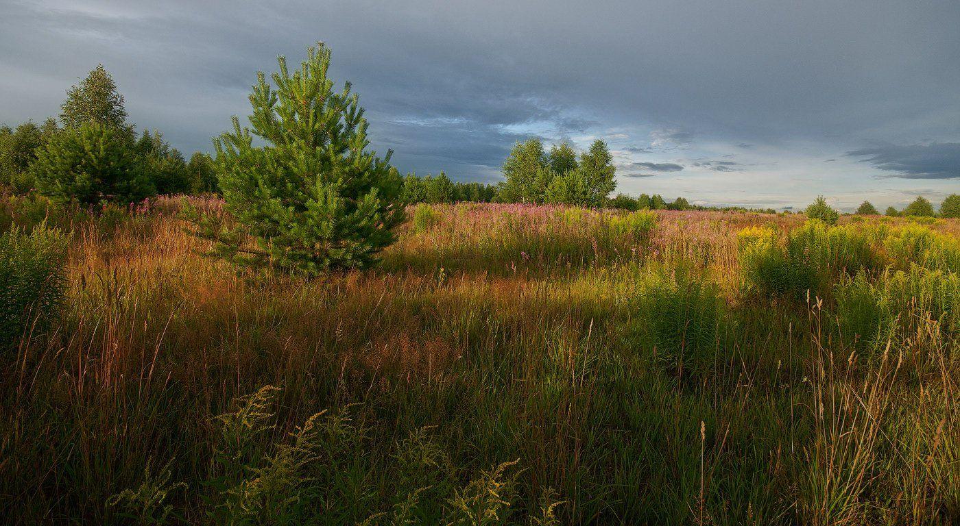 Вечер, Июль, Лес, Лето, Пейзаж, Природа, Трава, Владимир Комышев