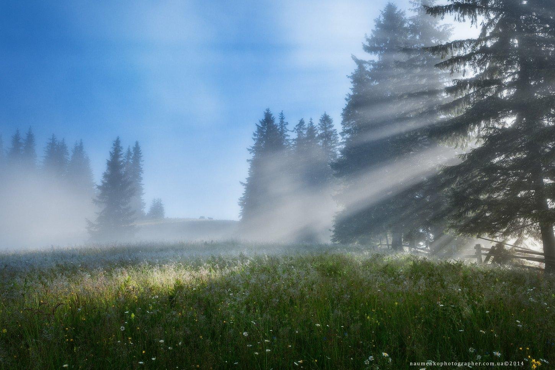украина, карпаты, дземброня, лето, туман, лес, пейзаж, небо, утро, горы, природа, рассвет, путешествия, туризм, солнце, сцена, фон, страна, красота, туманный, цвет, земля, свет, гора, дерево, Александр Науменко