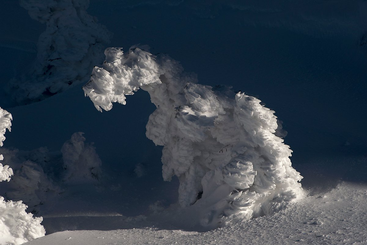 горная шория, зима, иней, кедр, мороз, сибирь, снег, холод, шерегеш, Валерий Пешков