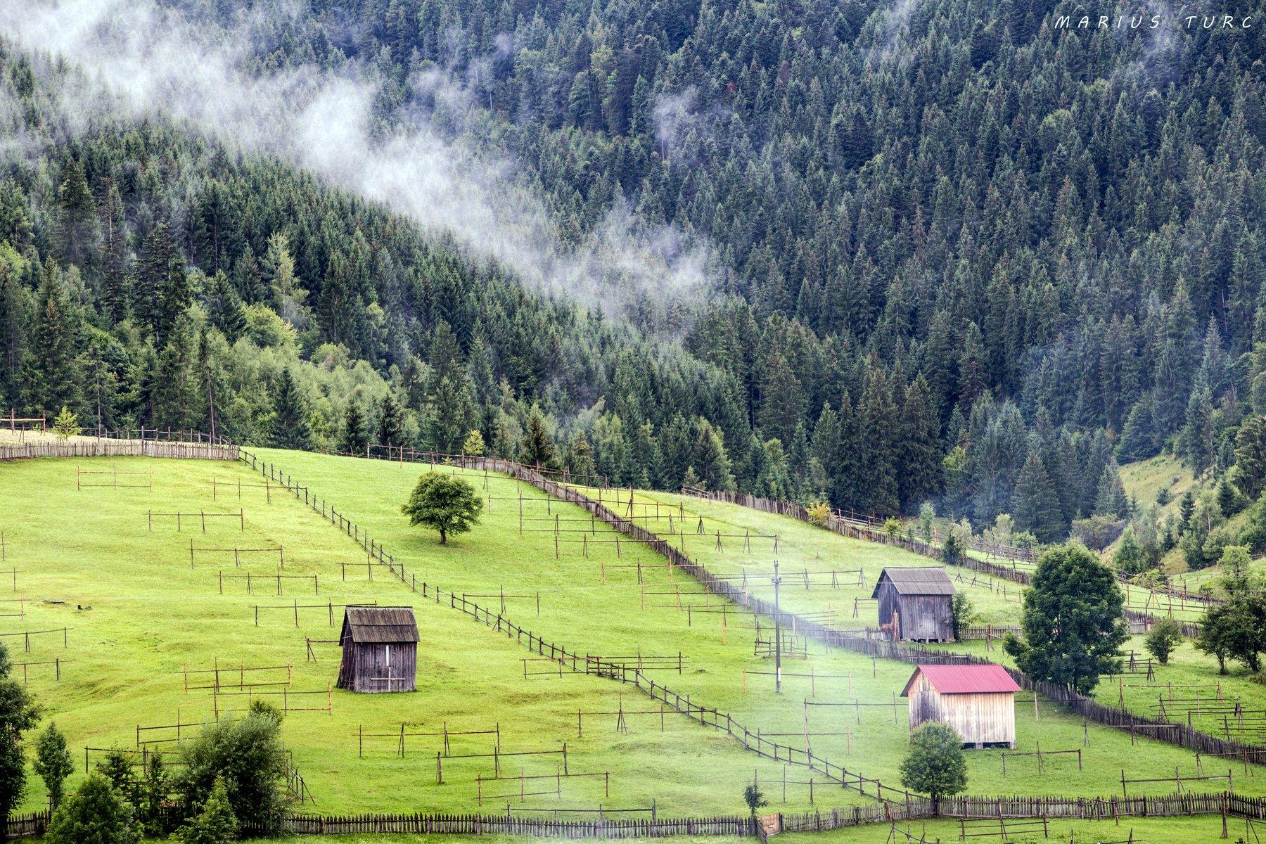 mist,trees,fog,land,hills,nature, Marius Turc