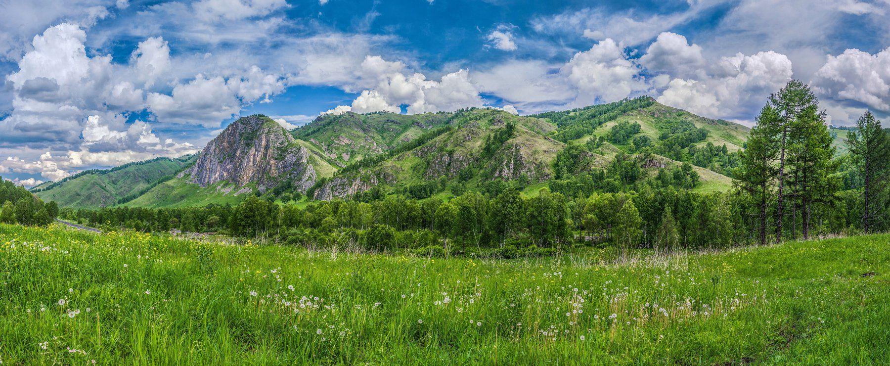 горы, небо, облака, цветы, цветение, деревья, лето, Горный Алтай, пейзаж, природа, Sergey Oslopov