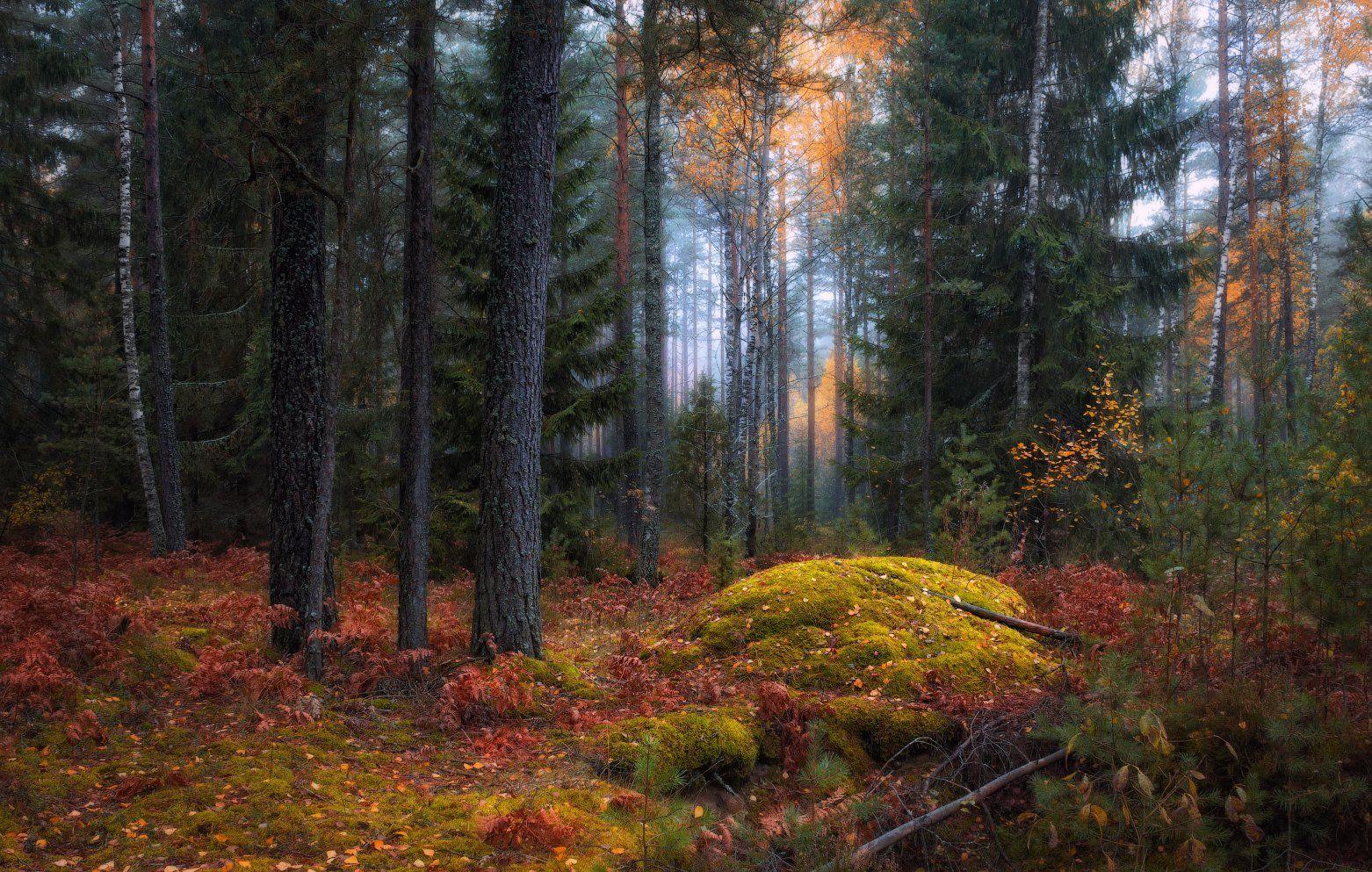 Тихо в осеннем лесу*) Сергей Шабуневич