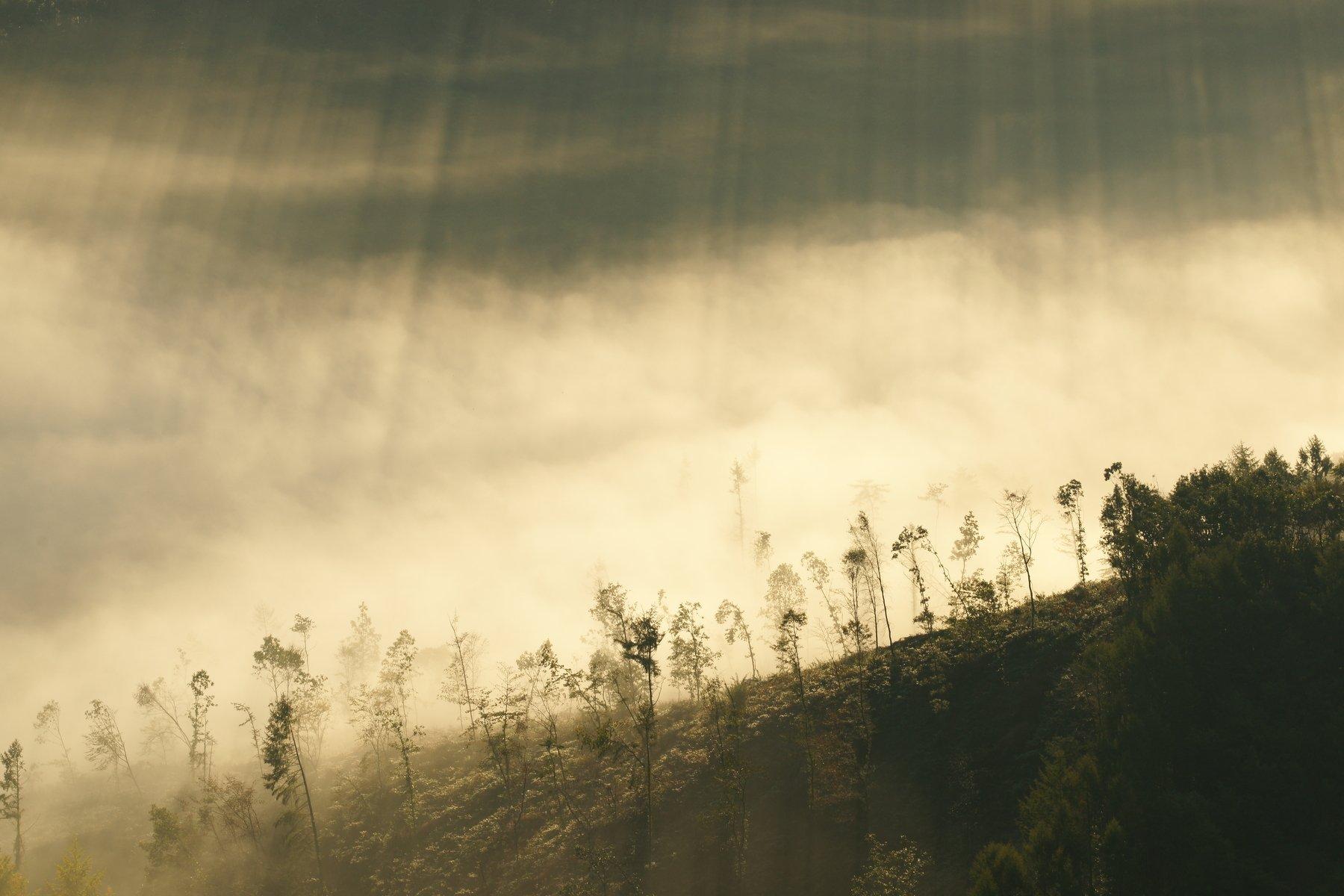 asia,korea,south korea,mountain,fog,light,trees,morning,nature,landscape, Shin