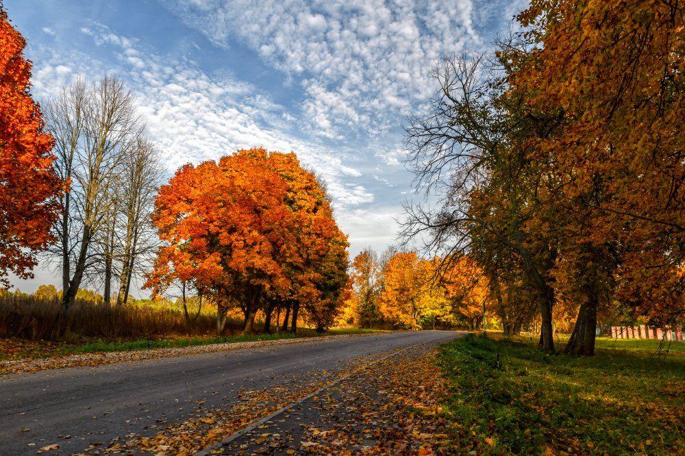 Дорога, Клены, Небо, Октябрь, Осень, Пейзаж, Природа, Россия, Юлия Лаптева
