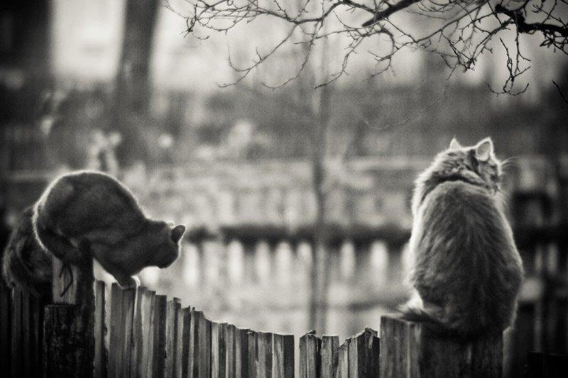 коты, юпитер 6, ч.б. , 20d, Raven.kir