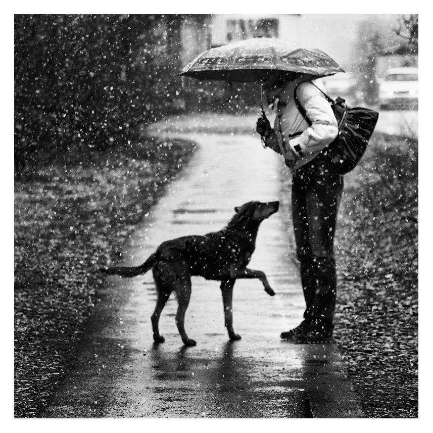 жанр, ч/б, снег, собака, абакан, b&w, black and white,черное и белое, черно-белое, Oleg Klochkov