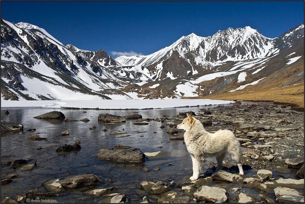 алтай, горы, горный алтай, южно-чуйский хребет,  озеро, тураоюк, май, пёс, аня графова, Аня Графова