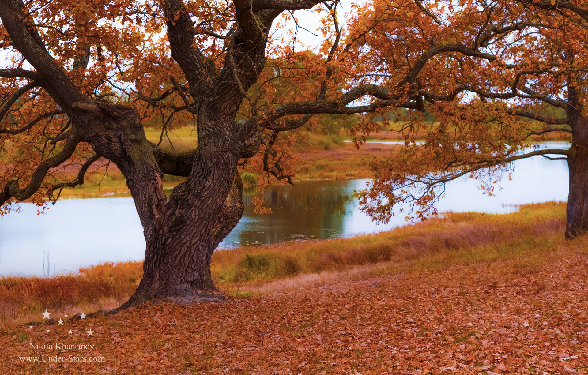 autumn, yellow, trees, leaves, sky, lake, red, forest, color, water, river, blue, light, clouds, tree, fall, leaf, oak, Харланов Никита