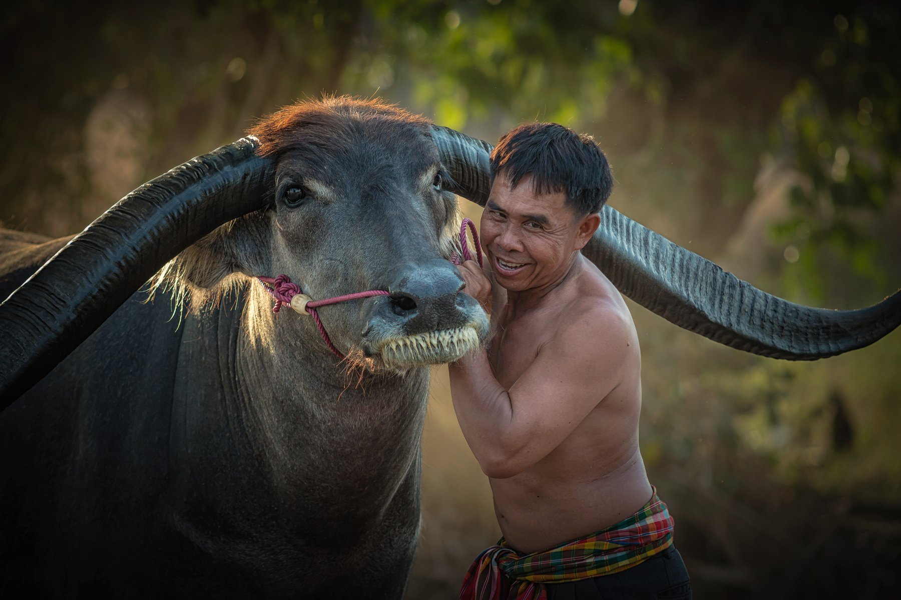 agriculture; animal; asia; asian; beautiful; beauty; buffalo; countryside; couple; culture; cute; face; farm; farmer; farmland; female; field; grass; green; handsome; happiness; happy; laos; leisure; lifestyle; long; love; mammal; meadow; myanmar; nature;, Visoot Uthairam