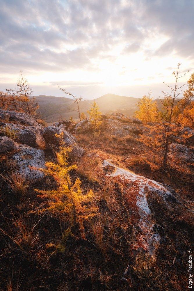 байкал, дерево, закат, лиственница, осень, солнце, степь, Евгений Трезубов