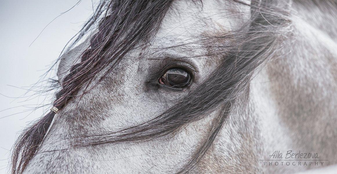 лошадь, серый, душа, небо, грива, глаза, Alla