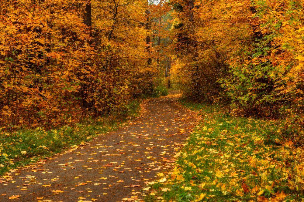 Дорога, Золотая осень, Лес, Осень, Пейзаж, Природа, Россия, Тропинка, Юлия Лаптева