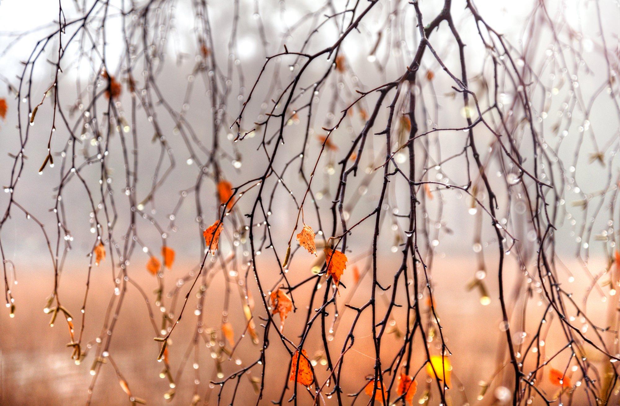 Осень... Гордеев Эдуард