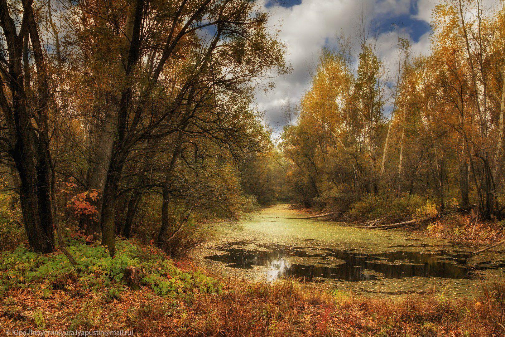 Осень, Природа, Ляпустин Юрий