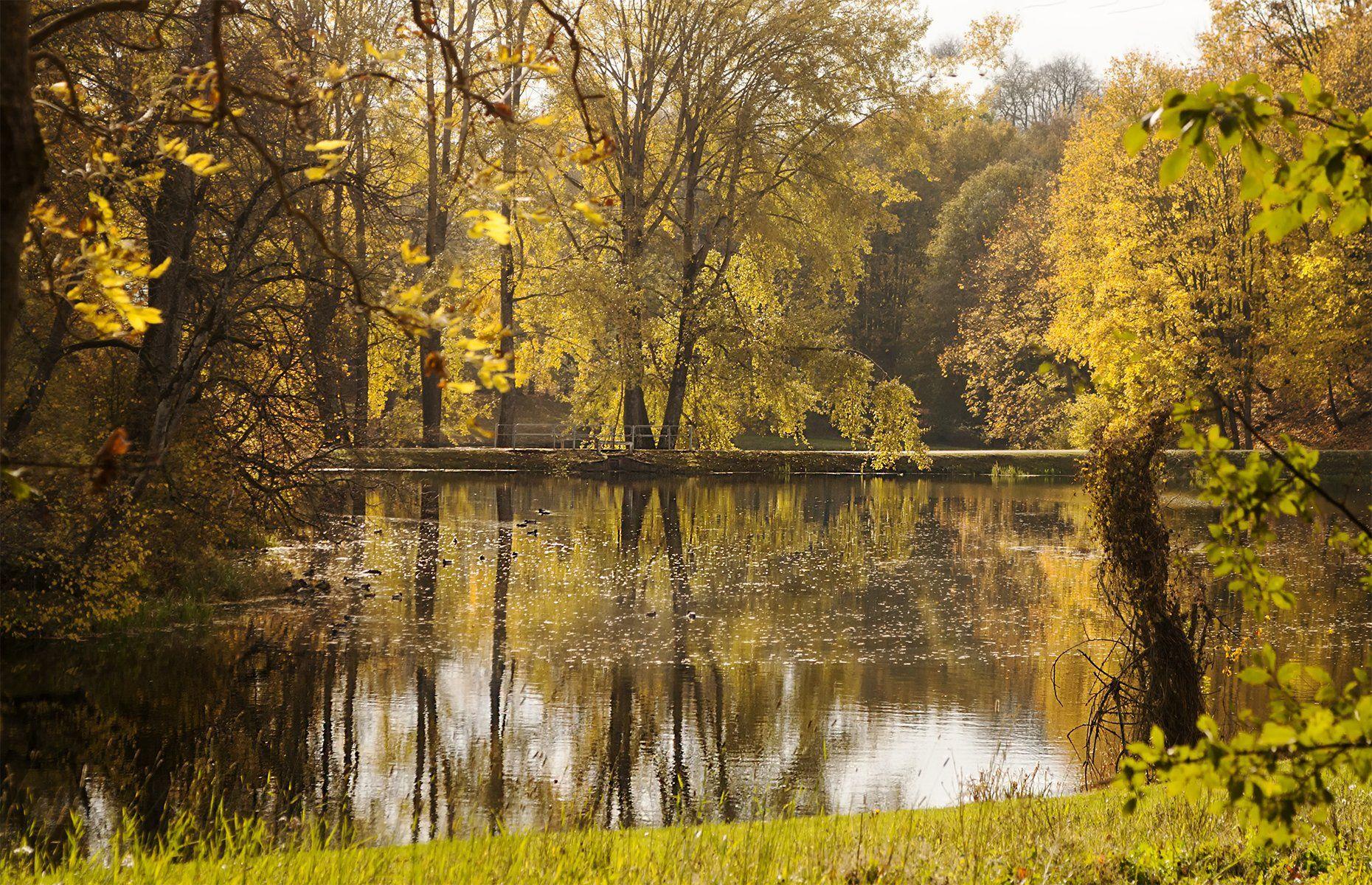 autumn,trees, Daiva Cirtautė