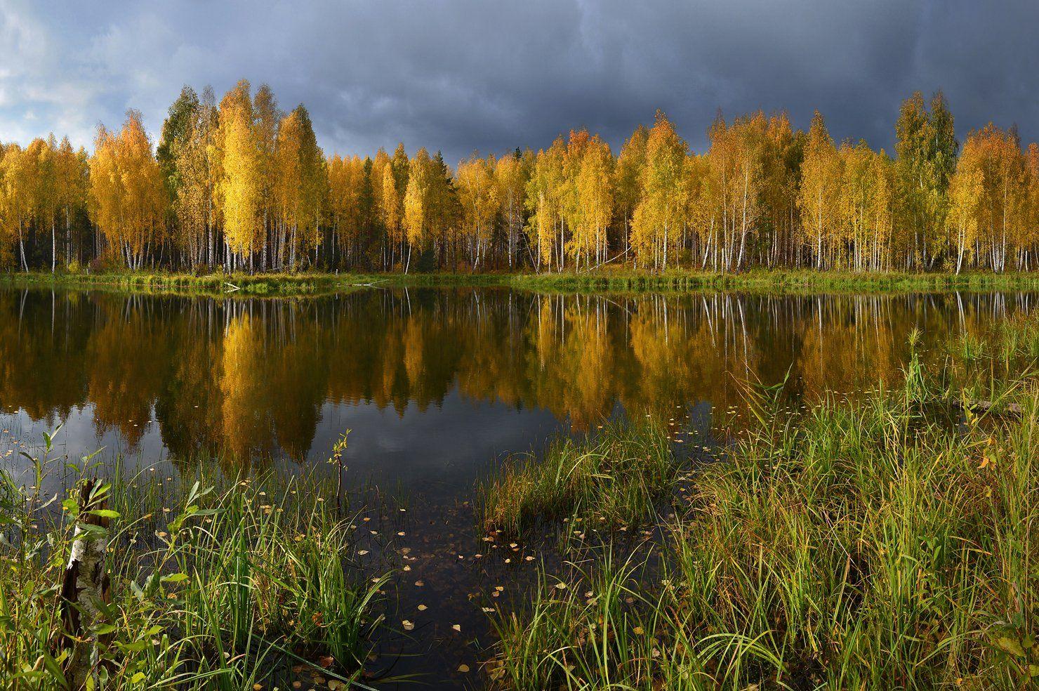 золотая осень, октябрь, солнечный свет, берёзы, непогода, небо, тучи, осень, озеро, отражение, трава, пейзаж, природа, Irina Shapronova
