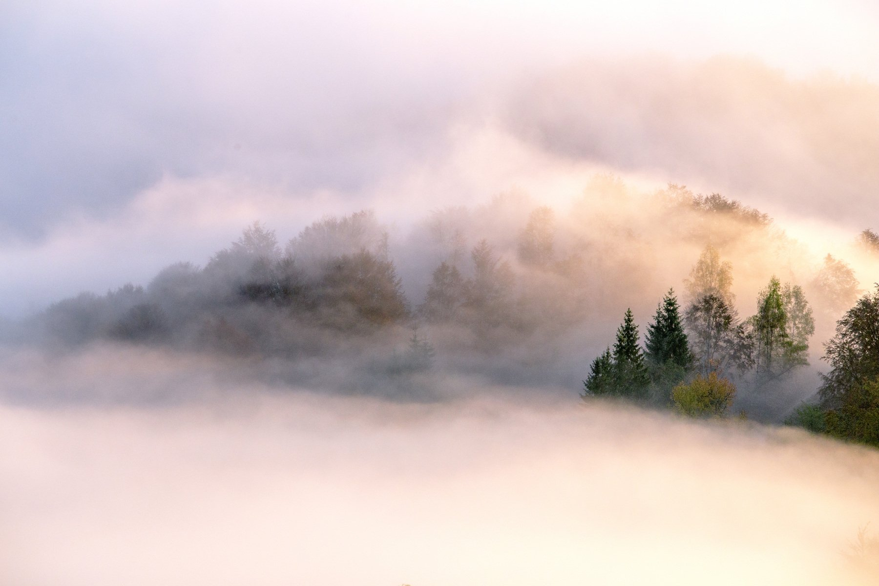 fog,mist,trees,morning,sunrise, Marius Turc