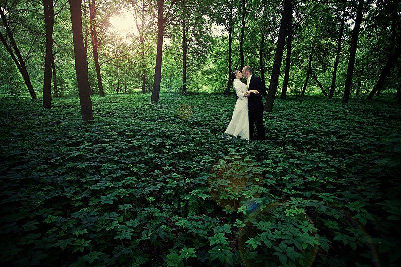 лес, ковер, молодые, Yaroslav V. Kloos
