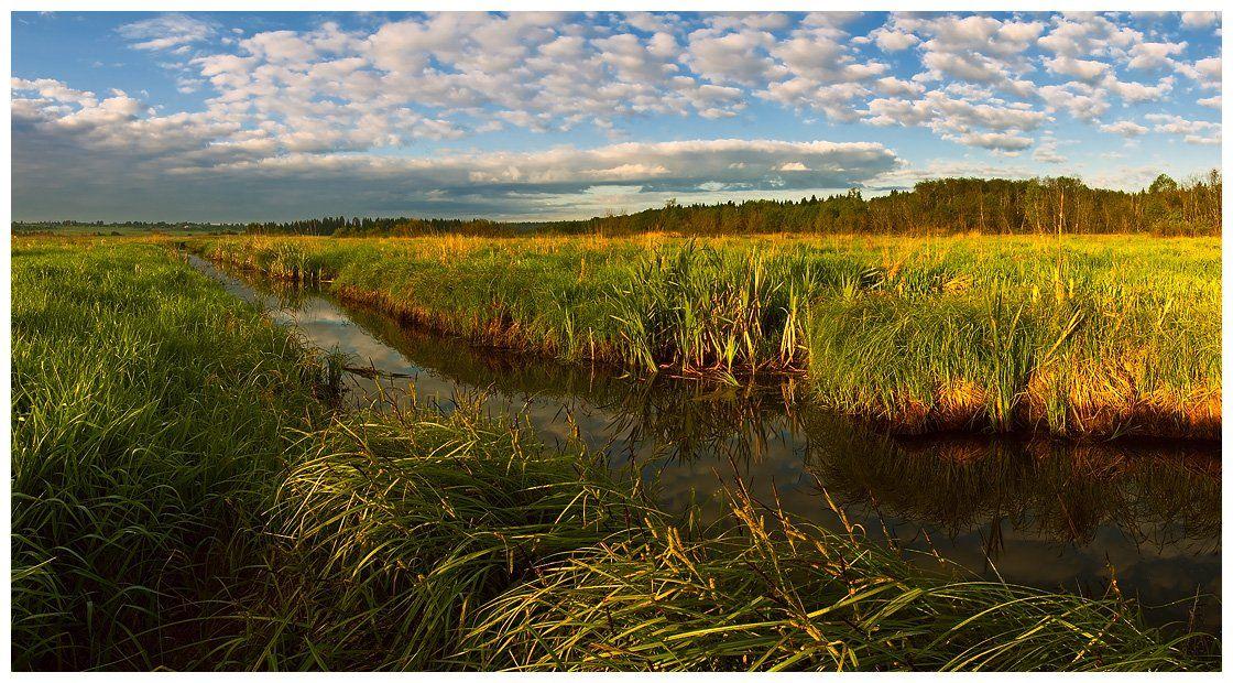 природа, пейзаж, утро, небо, трава, лес, река, Oleg Dmitriev