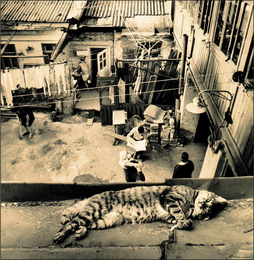 дворики, кот, кошка, крыша, Valentin Sichinskiy