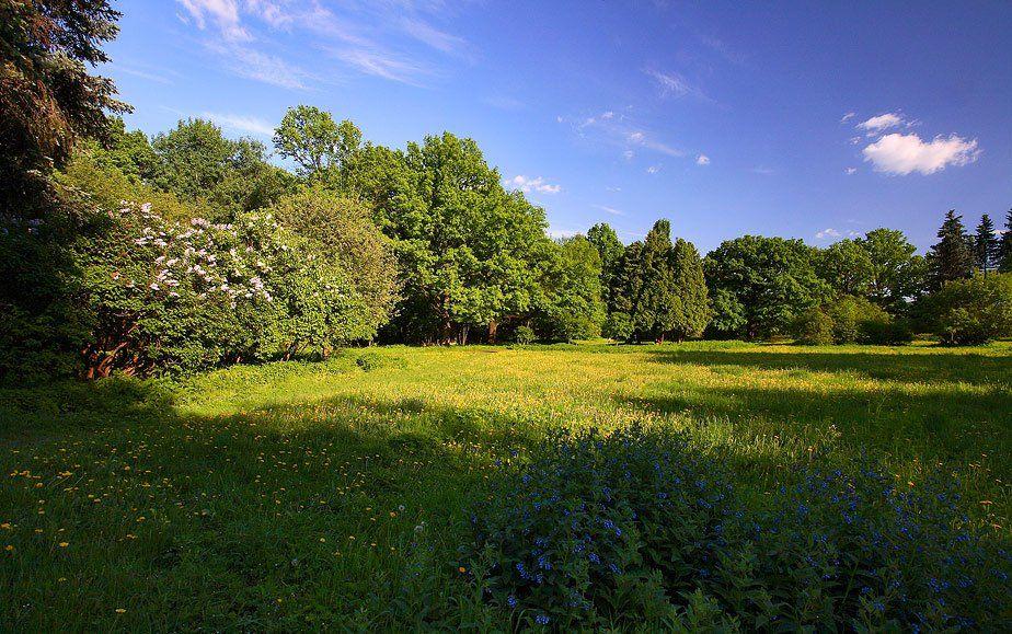 ботанический, сад, Дмитрий