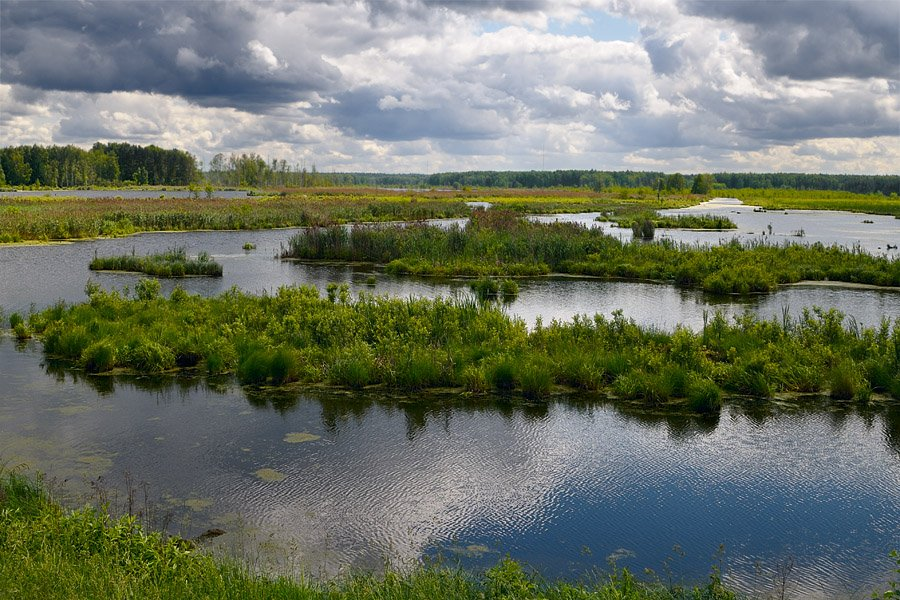 россия, москва, лосиный остров, река яуза, торфяные болота, Kaiser Sozo