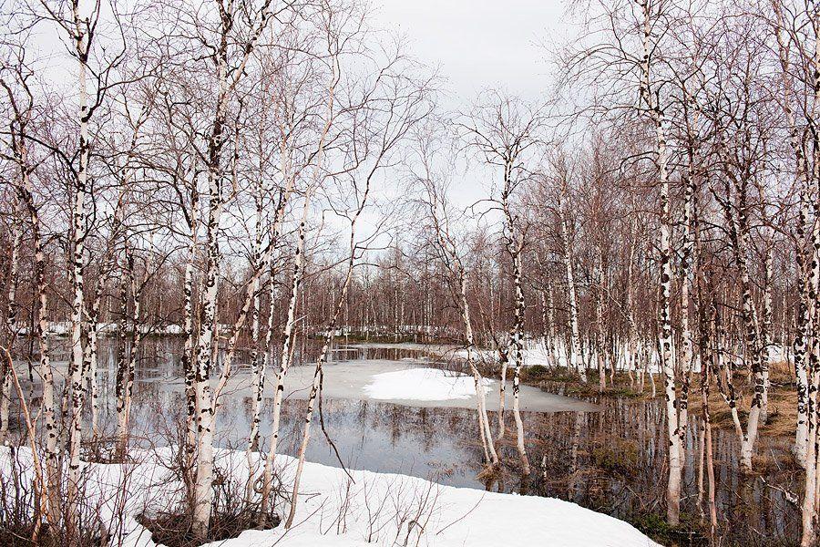 природа, весна, пейзаж, den-sau-pin