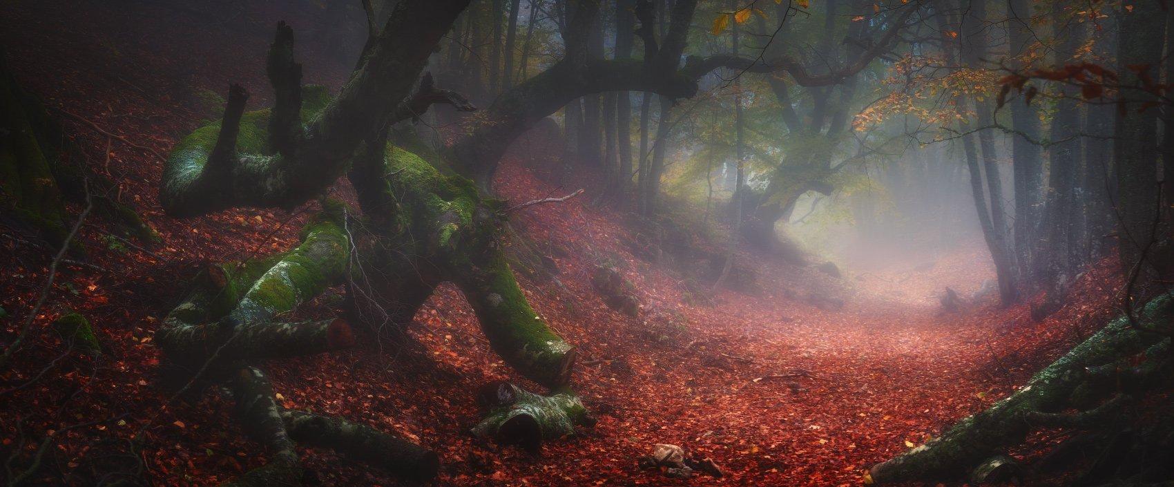 крым, демерджи, осень, лес, туман, Андрей Уляшев (Mercand)