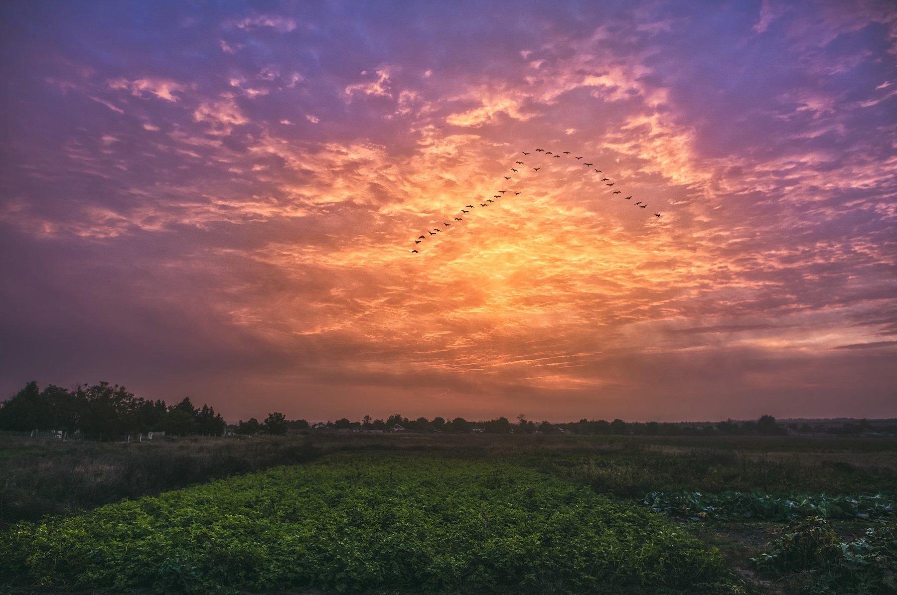 flock,birds,flight,sky,clouds,morning,glow,field,darkness ,autumn ,Russia , Сергей Нестеров