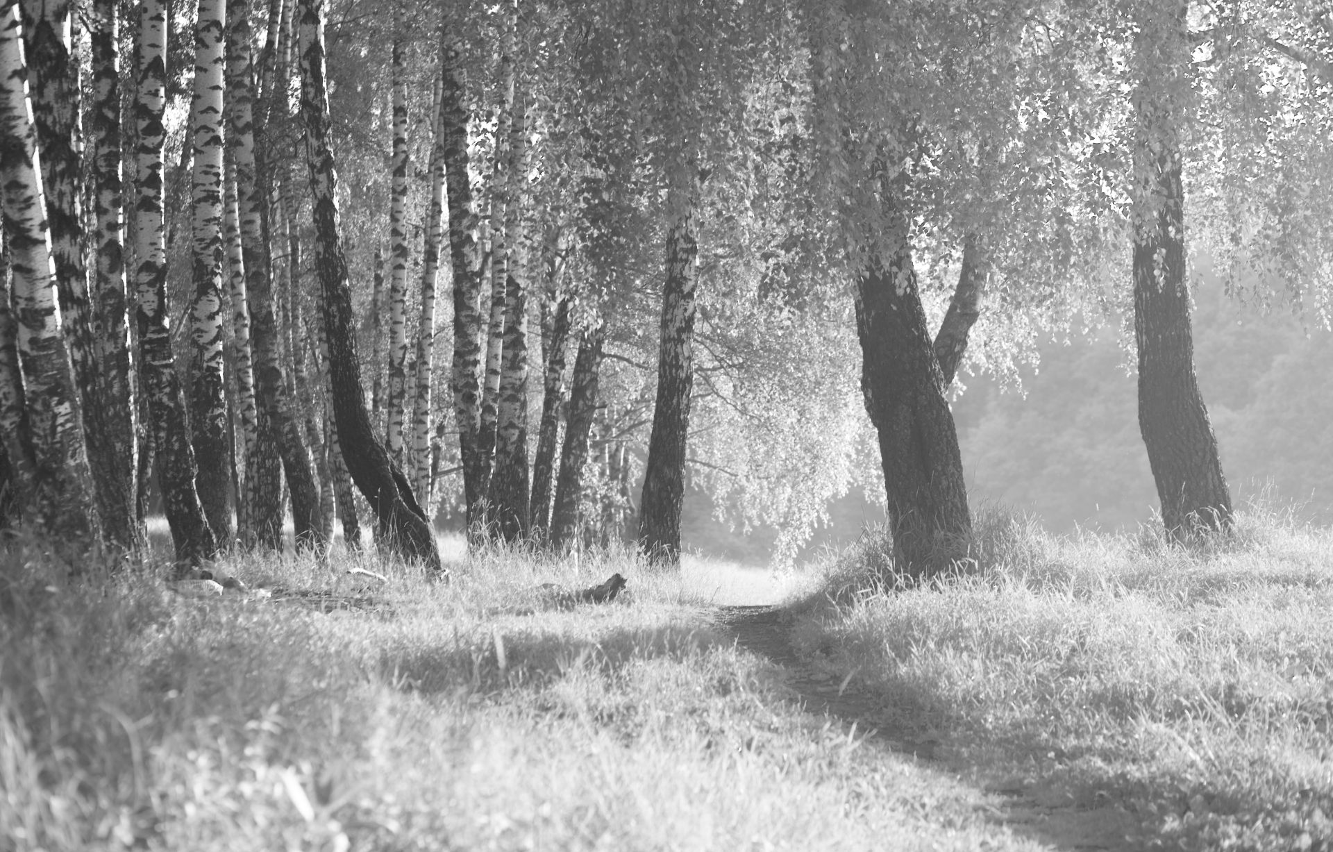 пейзаж, лес, деревья, черно-белое фото, landscape, forest, wood, black and white photo, Виктор Бертяев