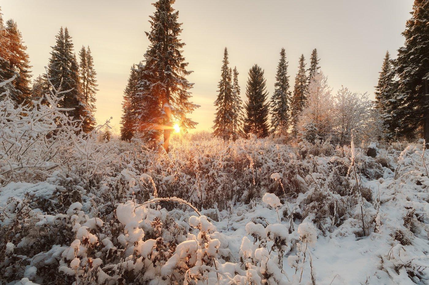 печора,коми,север,ноябрь,снег, Игорь Подобаев