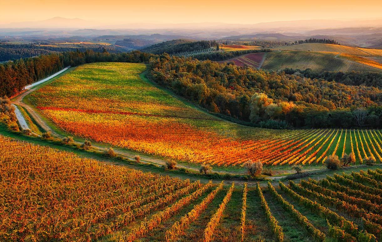 виноградник, пейзаж, кьянти, италия, осень, закат, Алла Соколова