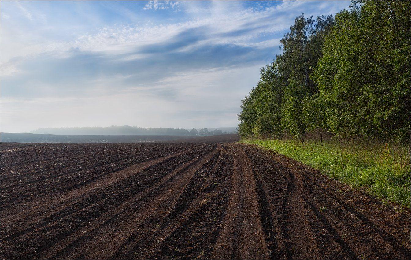 утро, весна, поле, лес, дымка,, Сергей Шабуневич