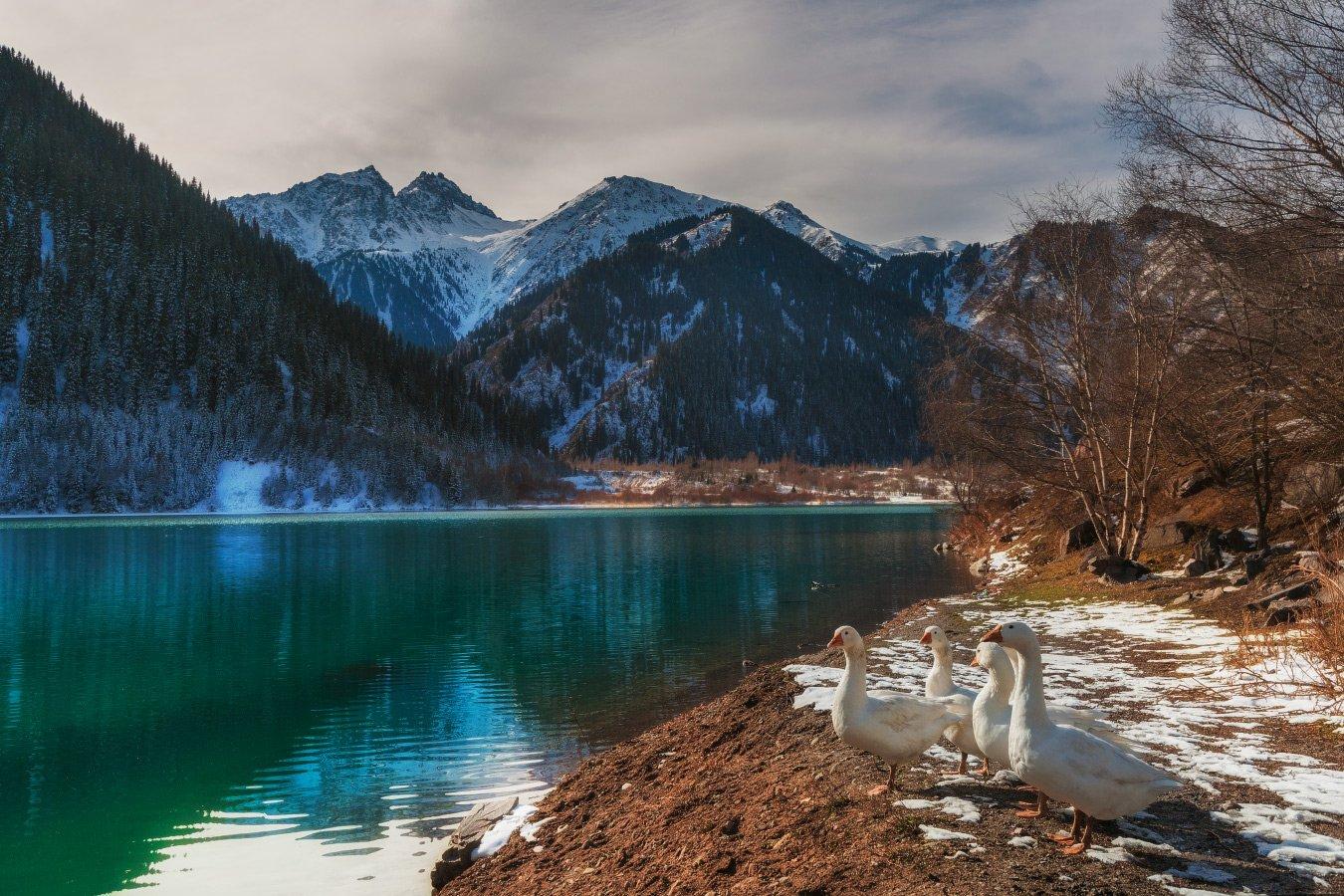 горы, осень, озеро, иссык, гуси, Ольга Кулакова