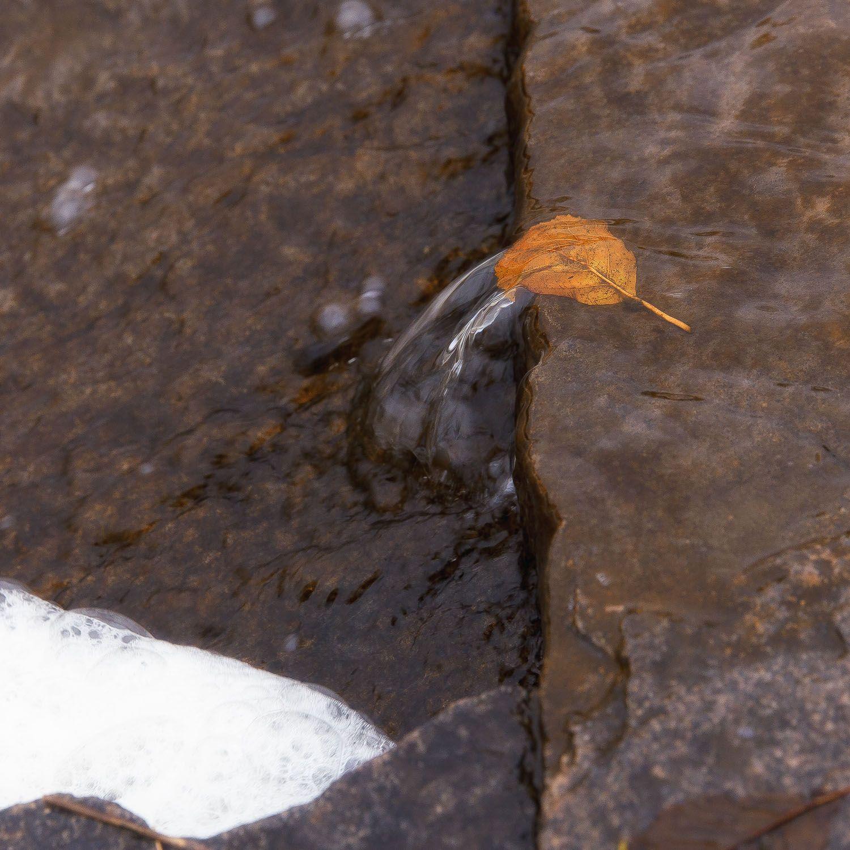 лист, борьба, вода, камень, течение, Илья Беленький
