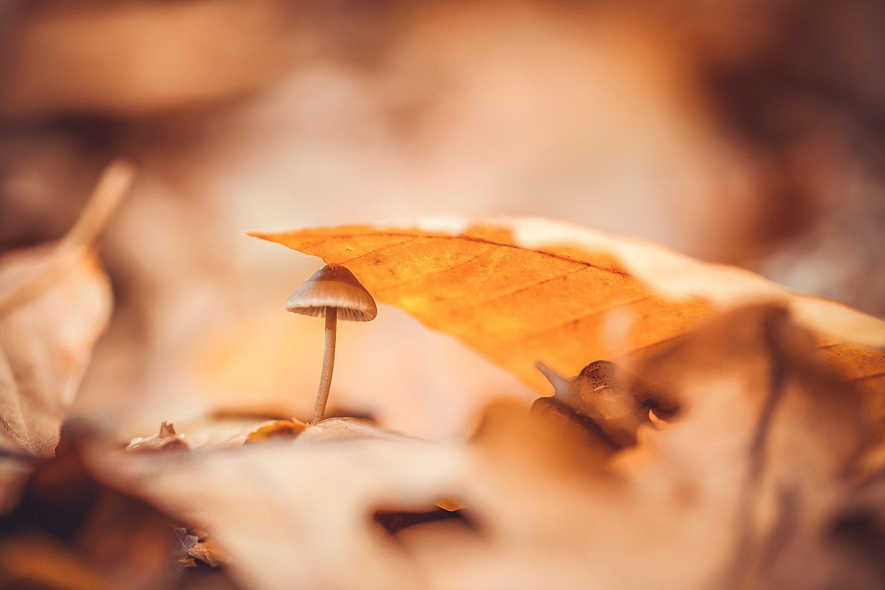 гриб,осень,лес,листья, Инна Сухова
