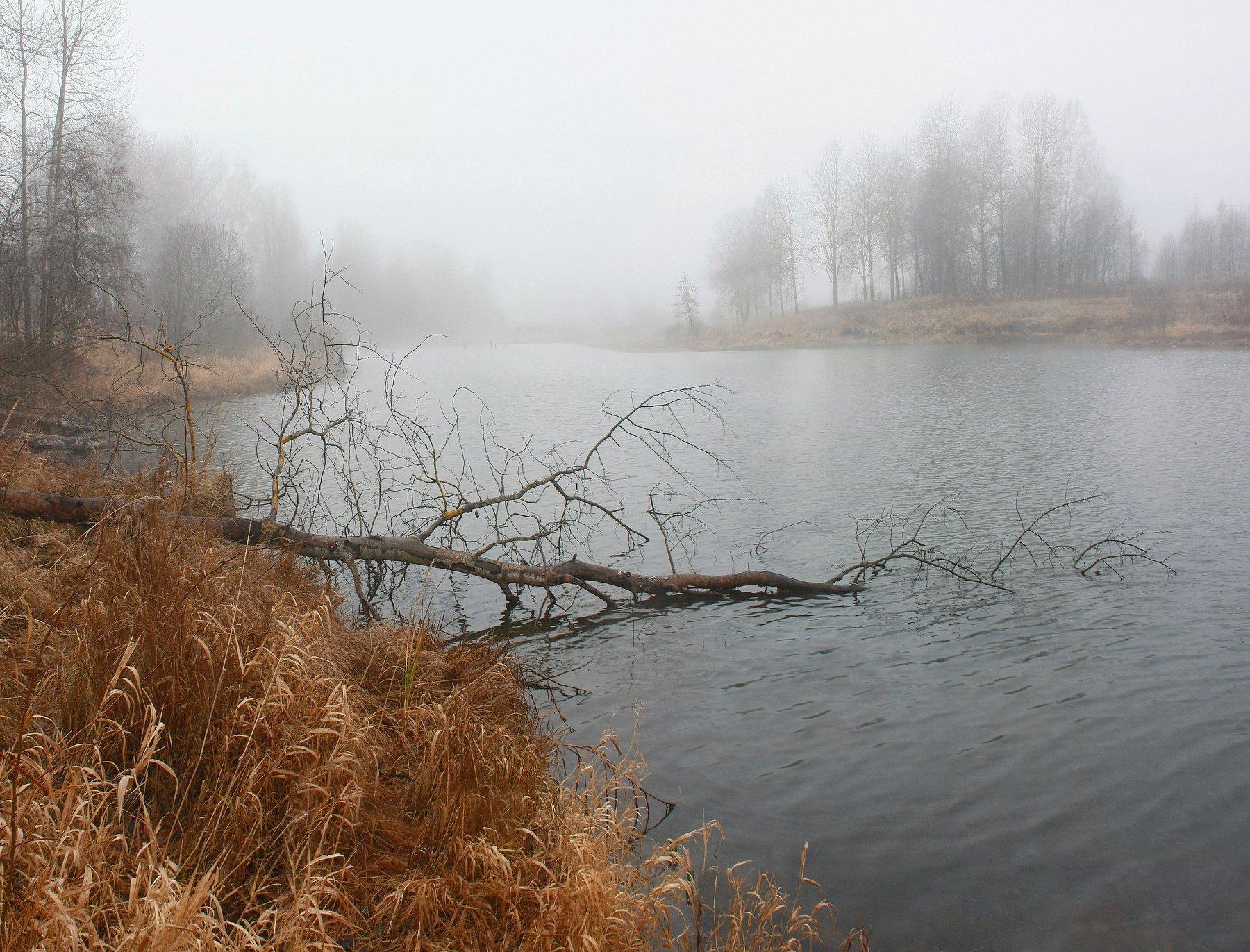 осень, туман, озеро, Свистков Александр