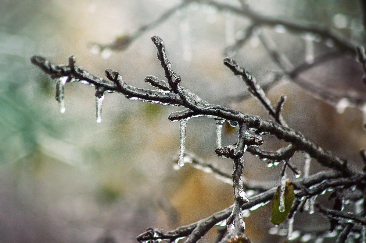 ледяной дождь, анна чернякова, природа, Чернякова Анна