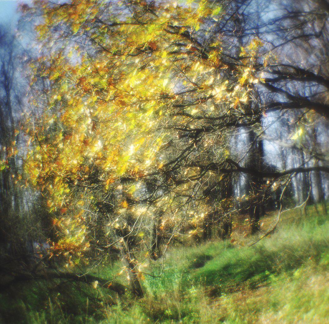 medium format, monolens, film 120, пейзаж, 6х6, осень, листья, плёнка, киев 60, парк, монокль, романтическая, живопись, davydov, Давыдов Михаил