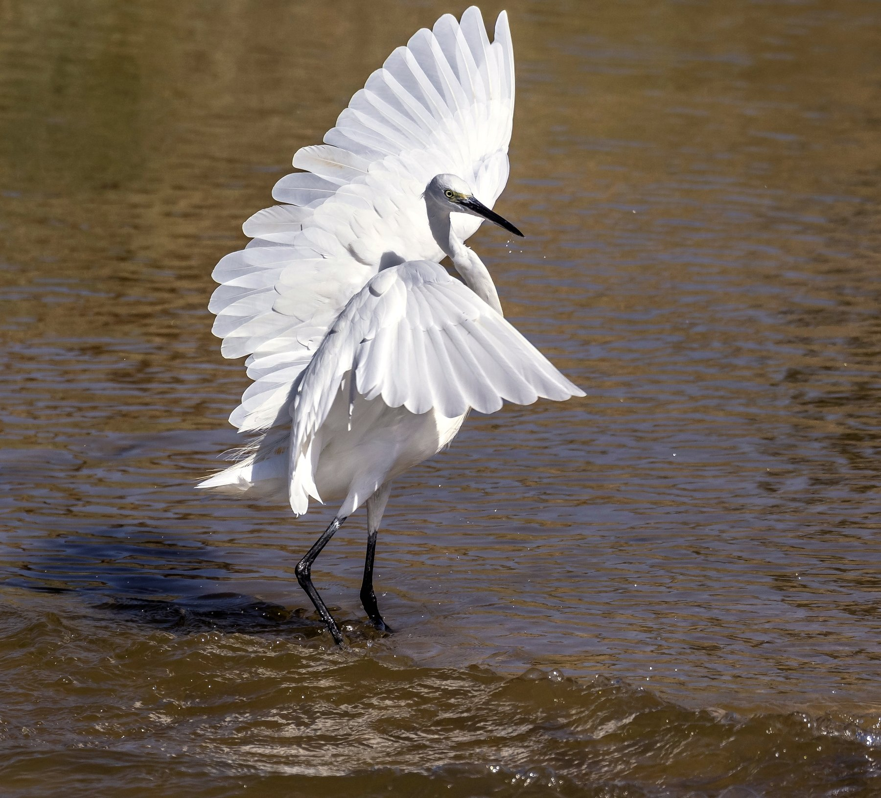 israel birds, ruslan