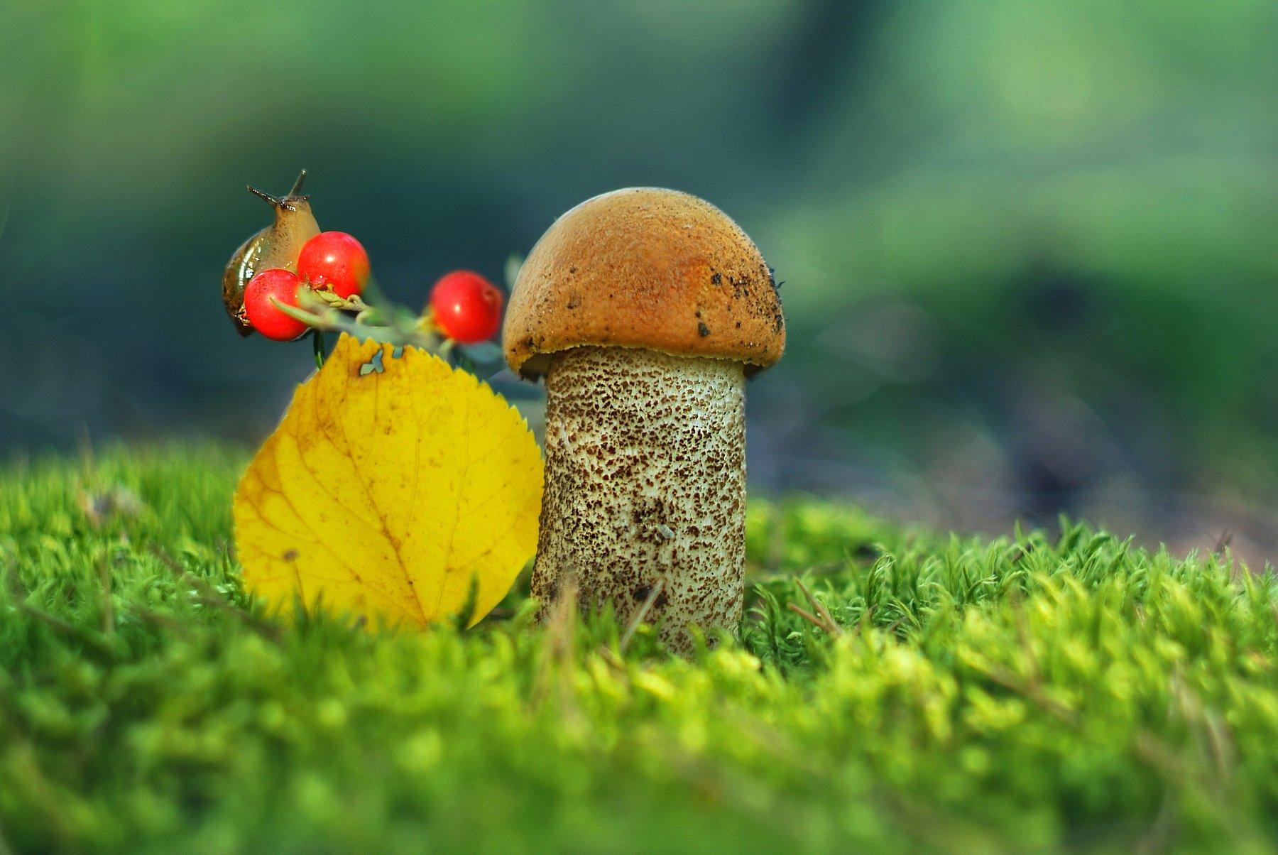 грибы лето природа, Александр Гвоздь