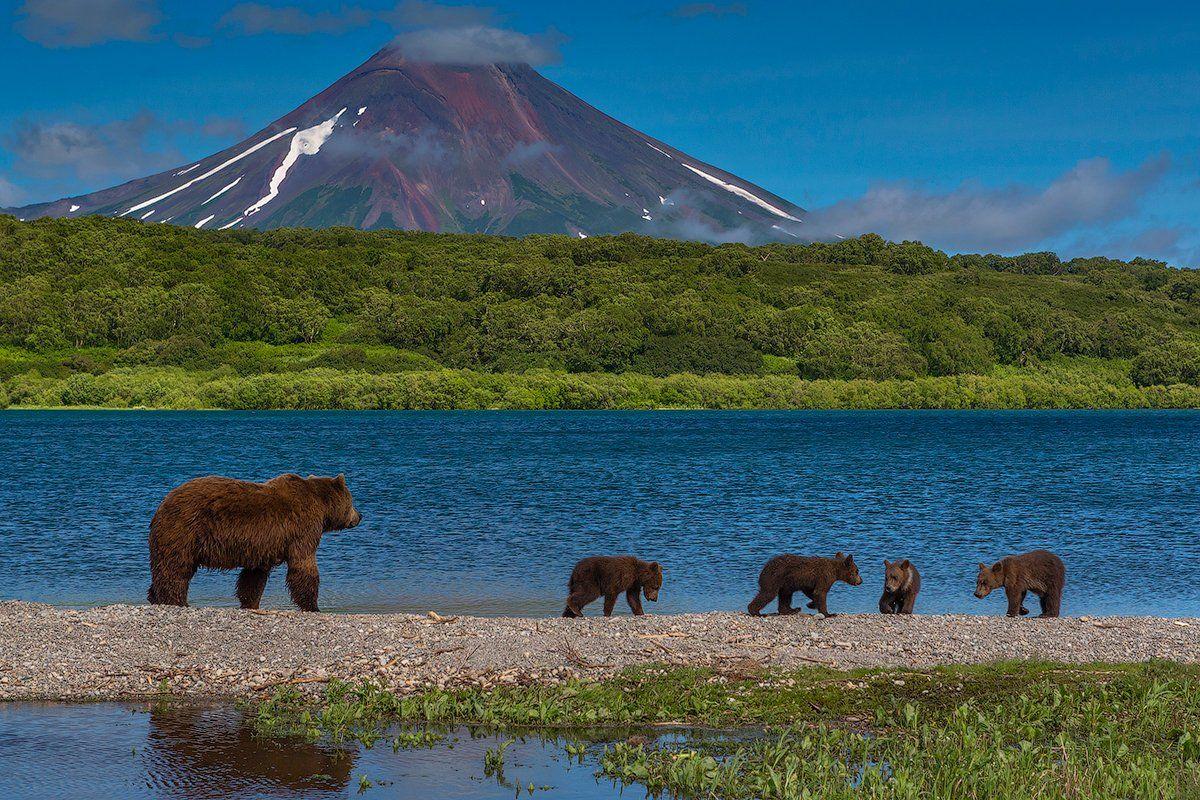 камчатка, фототур, путешествие, природа,  пейзаж, вулкан, медведь, озеро, заповедник, Денис Будьков