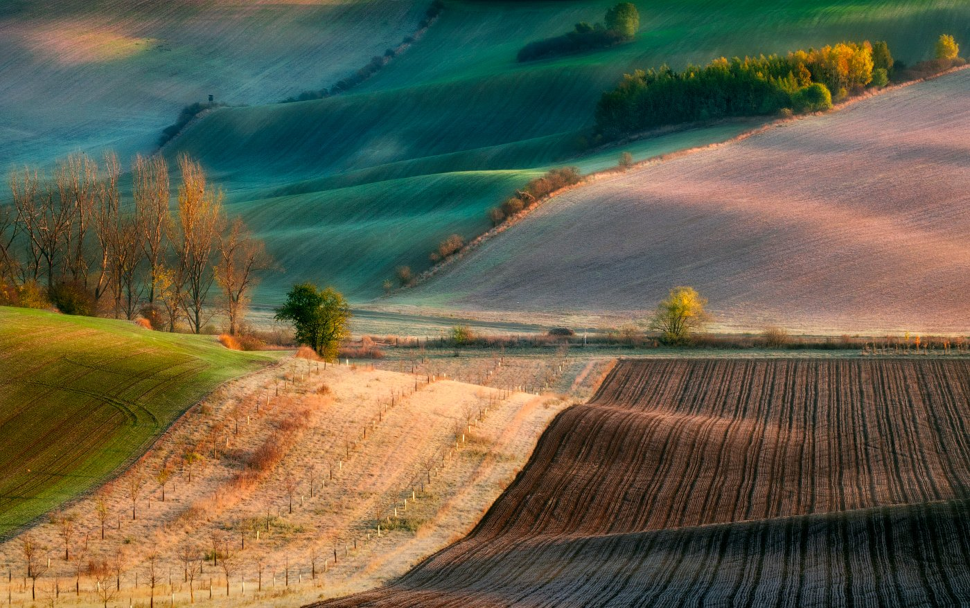 Моравия, волны, поля, утро, деревья, осень, рассвет, Cтанислав Малых