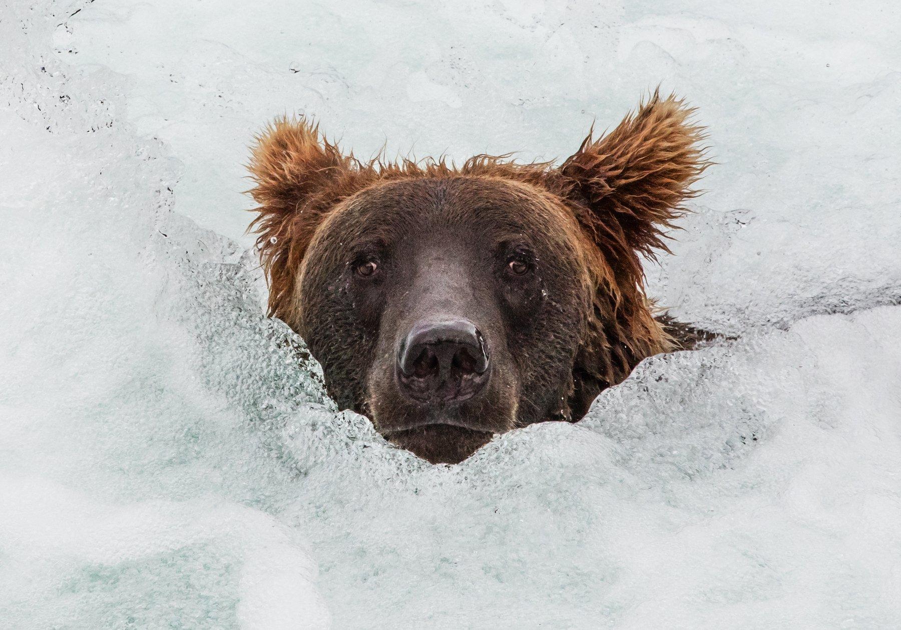 Аляска, США, Алексей Сулоев