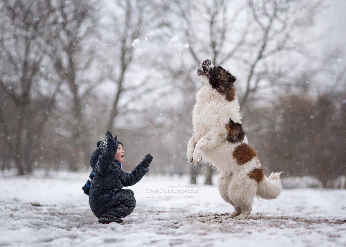зима, собака, дети, московская сторожевая, Андрей Селиверстов
